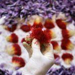 Exporting Saffron