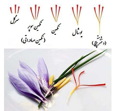 راهنمای خرید زعفران