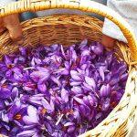 زعفران ایرانی طلای سرخ جهان